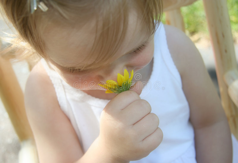 Download Sniffing daisies stock photo. Image of nose, yellow, hand - 208770