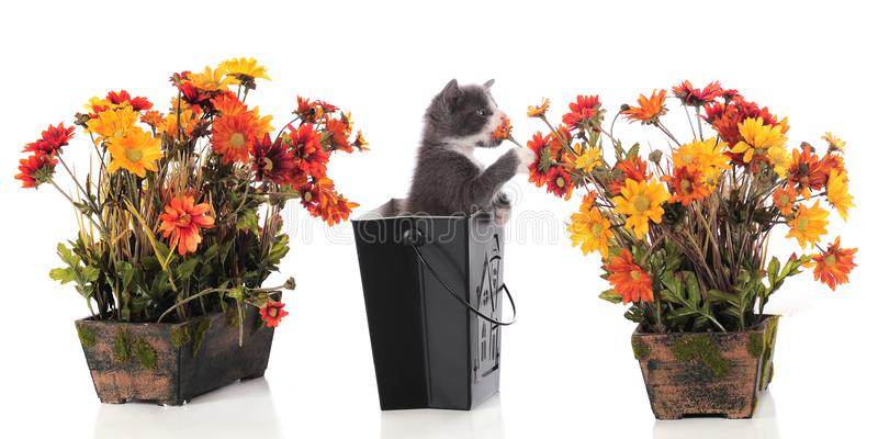 Download Sniffing Kitty stock image. Image of pail, mammal, cute - 15629309