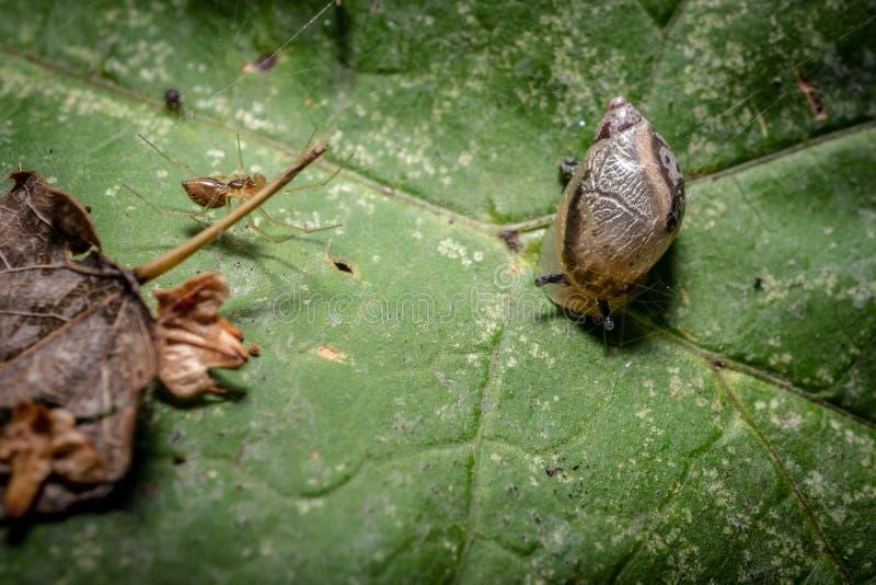 Snigel på en växt fotografering för bildbyråer