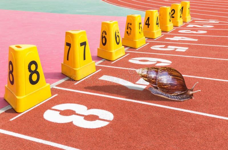 Snigel som är klar på det rinnande spåret för start för konkurrens i stadion arkivbild