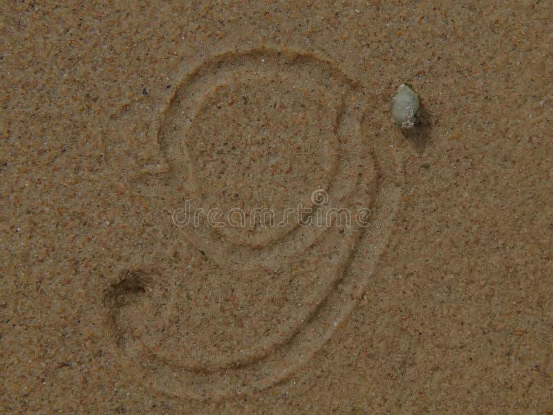 Snigelkrypning på sanden som lämnar teckningar arkivbilder