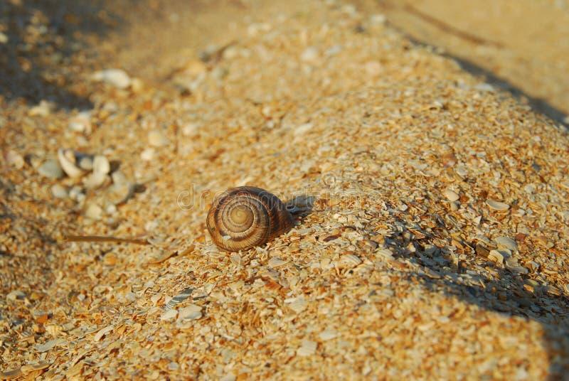 Snigelskalet på en sandig strand arkivbilder