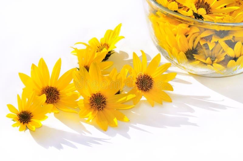 Snijbloemen op een witte achtergrond royalty-vrije stock foto