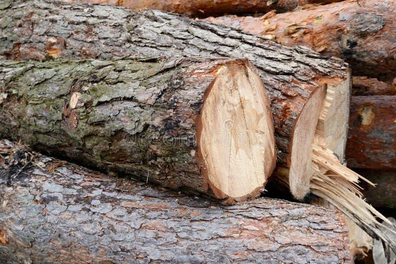 Snijd in openlucht dichte vers de logboeken van de boompijnboom stock fotografie