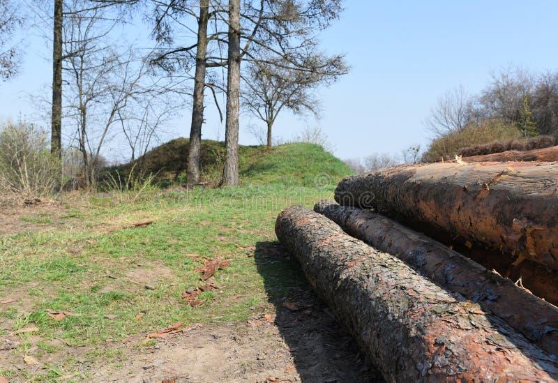 Snijd opgestapelde boom vers logboeken omhoog omhoog gestapeld bovenop elkaar in een stapel royalty-vrije stock afbeeldingen