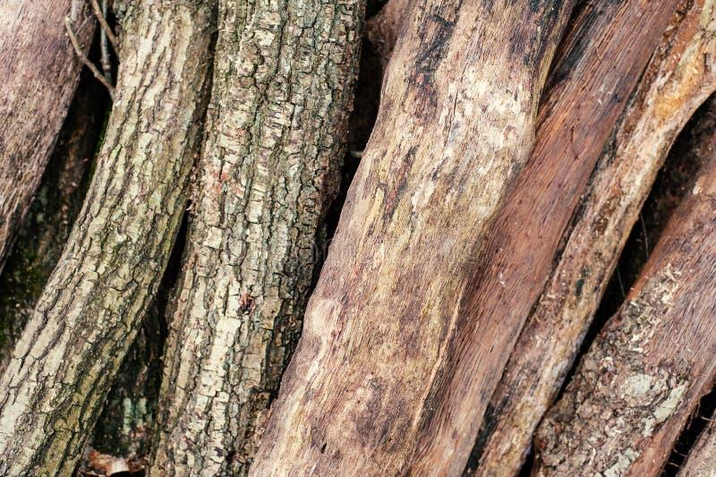 Snijd vers boomlogboeken op het groene gras omhoog worden opgestapeld dat stock fotografie