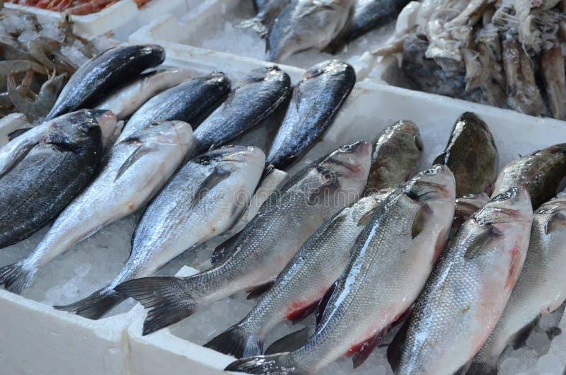 Snijd vers overzeese vissen europa Mediterraan voedsel ADRIATISCHE OVERZEES Verkoop van onlangs gevangen vissen Sibasium Dorada g royalty-vrije stock foto