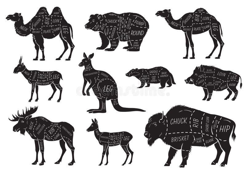 Snitt av djuruppsättningen Affischslaktarediagram - löst djur Hand-dragit typografisk för tappning stock illustrationer
