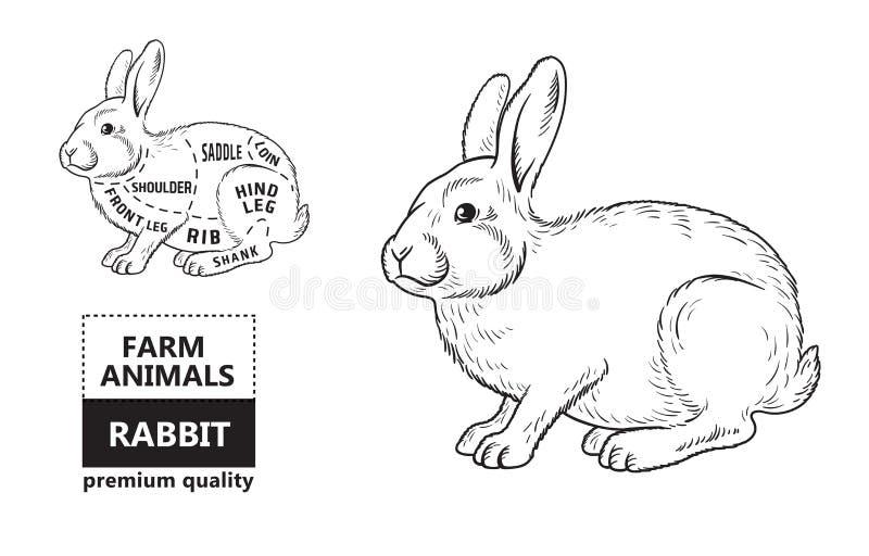 Snitt av kanin Affischslaktarediagrammet för livsmedel, köttdiversehandel, slaktare shoppar, bondemarknaden Kaninkontur vektor stock illustrationer