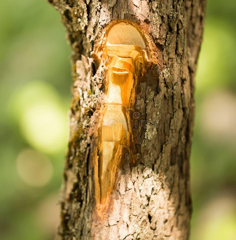 Snitt med en yxa på skället av ett träd royaltyfri foto