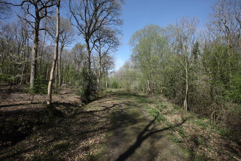 Snitterfield кусты Стоковая Фотография