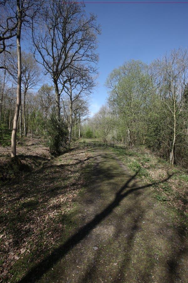 Snitterfield Arbustos Imagenes de archivo