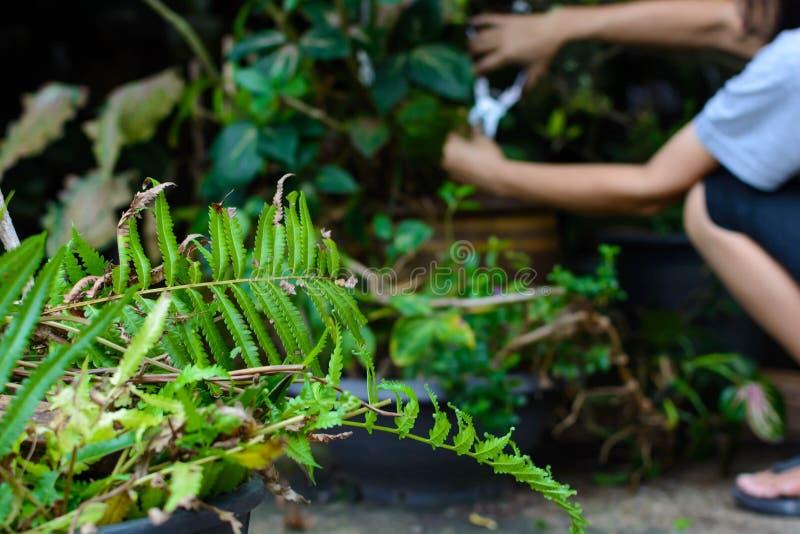 snittet för folkhållknivar förgrena sig i trädgård royaltyfri bild