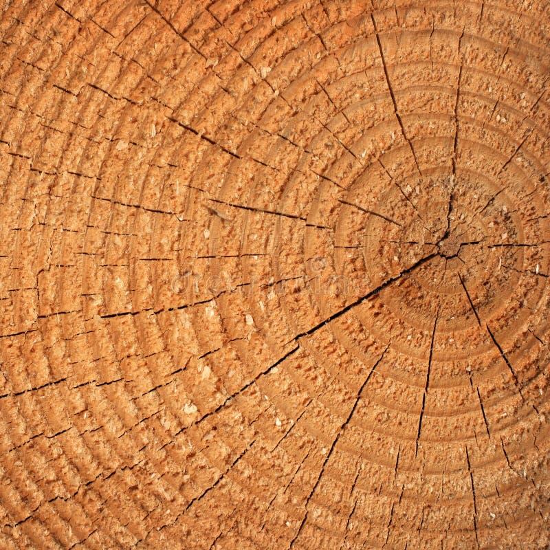 snittet sörjer treen arkivfoton
