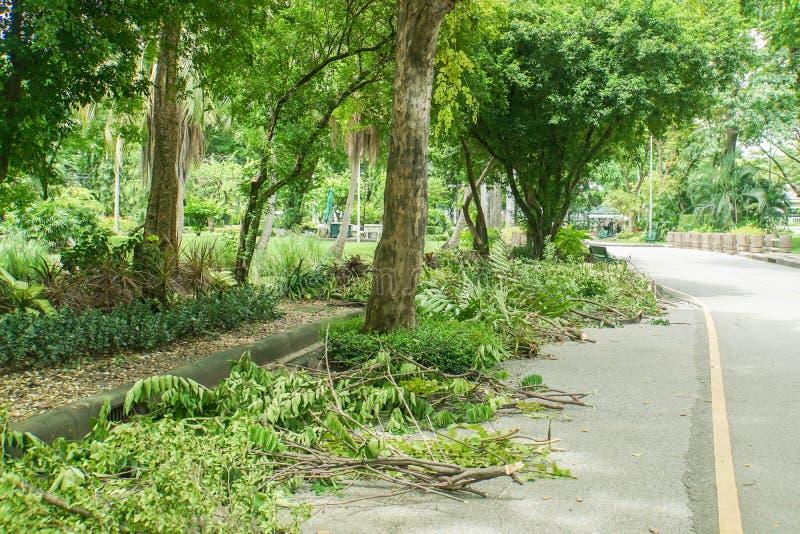 Snittträdfilialer på gångbanan i gräsplanen parkerar royaltyfri foto
