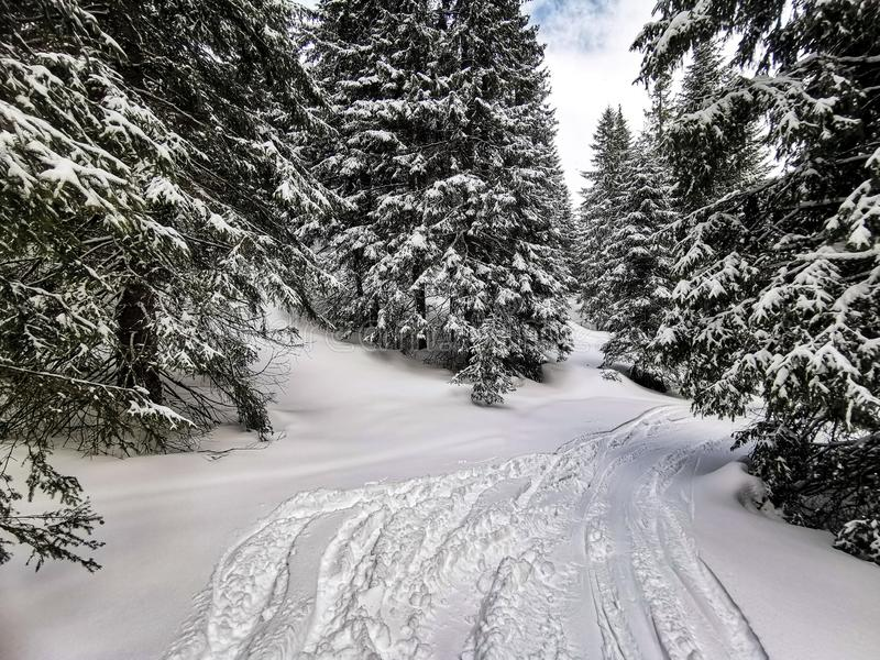 SnJowboarding freeride Slowakei Jasna stockfoto