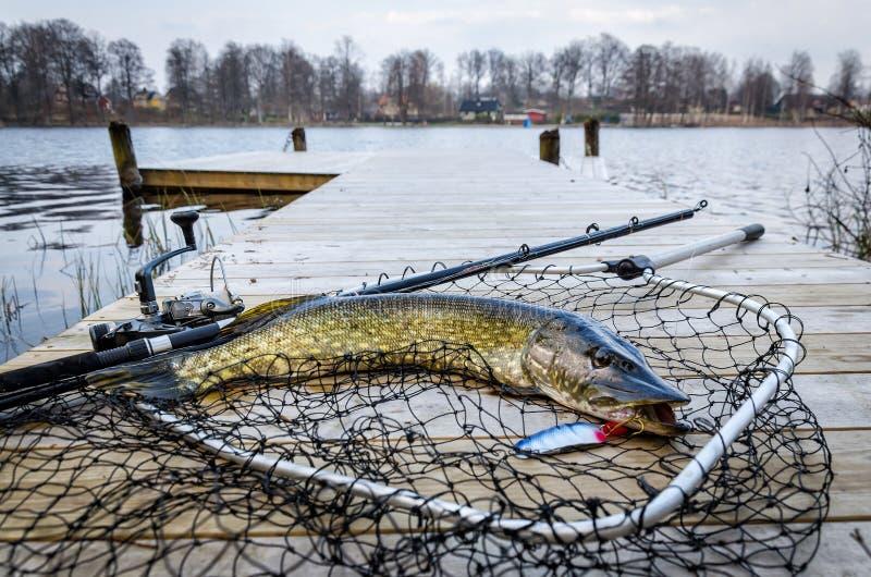Snoeken visserijtrofee in het de lentemeer dat wordt gevangen royalty-vrije stock fotografie