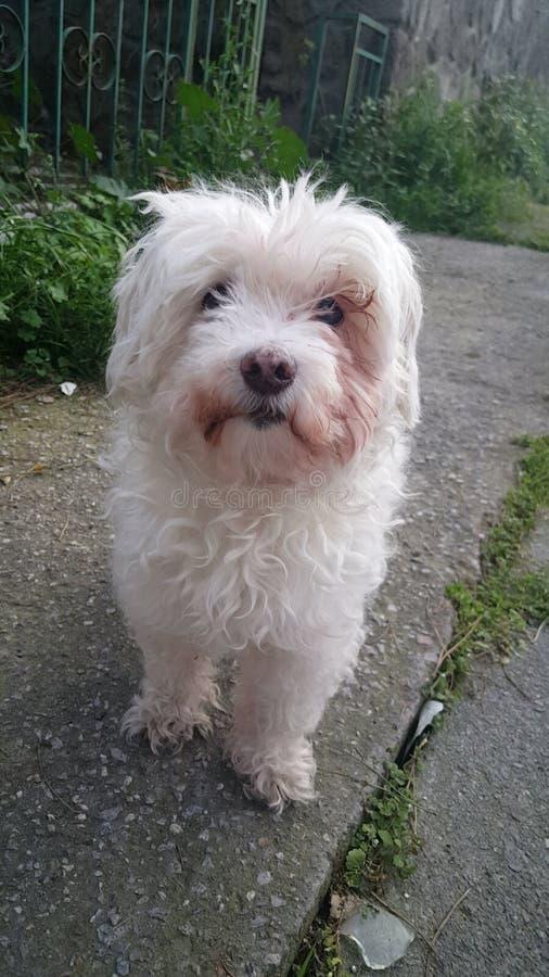 Snoepje Weinig Hond stock foto