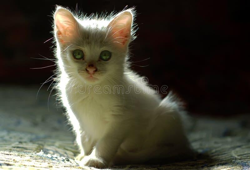 Snoepje weinig wit katje 1 stock afbeelding