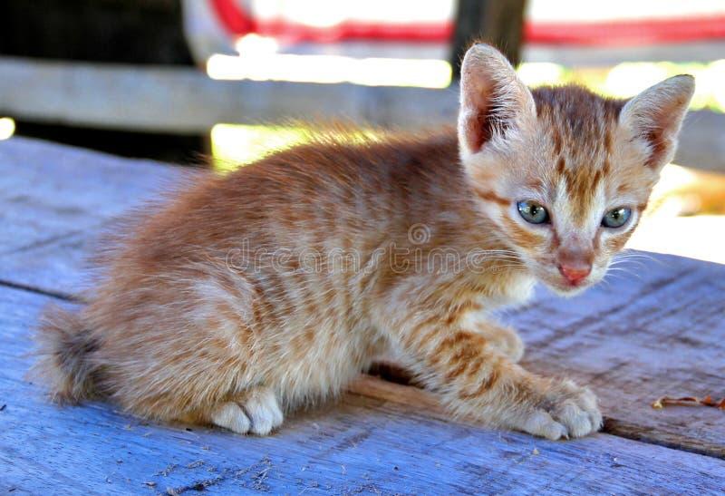 Snoezig katje stock afbeelding