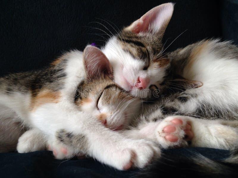 Snoezige Katjes stock fotografie