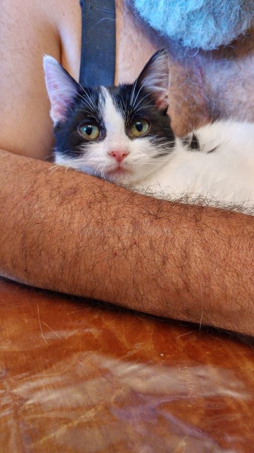 Snoezige katten royalty-vrije stock fotografie