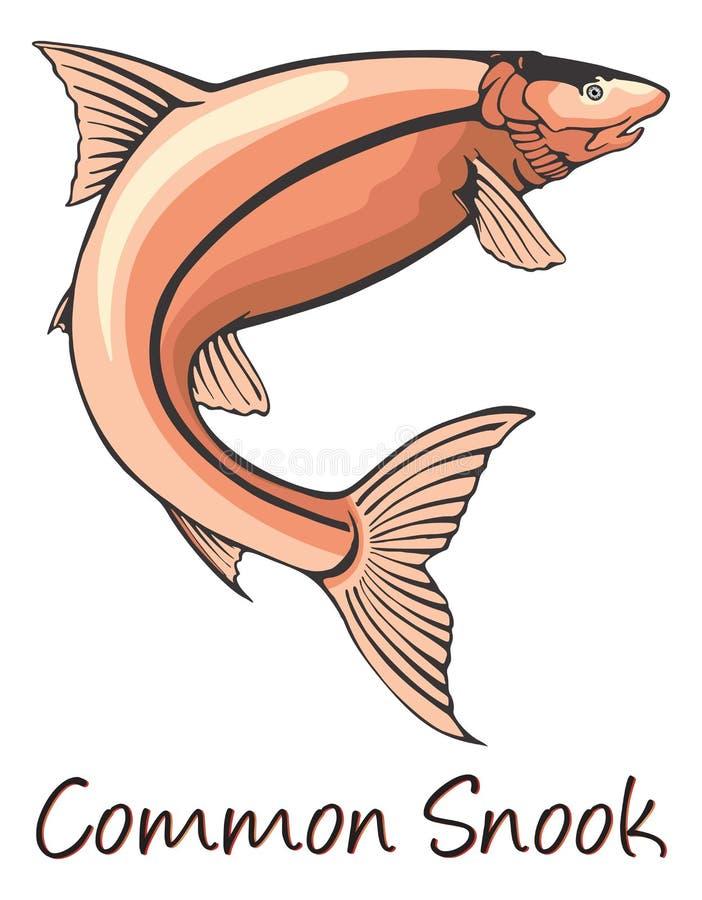 Snook comune, illustrazione di colore illustrazione vettoriale