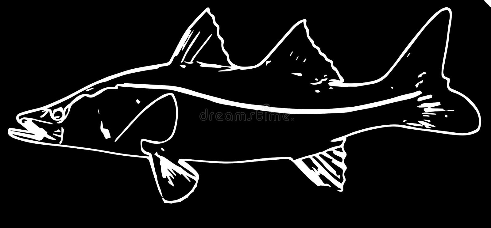 Snook saltwater fishing on black background. Snook are prized as game fish, being known for their great fighting abilities stock illustration