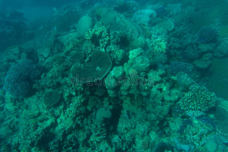 Snorcheling on a beautiful colorful coral reef in sea. Summer vocation. royalty free stock images