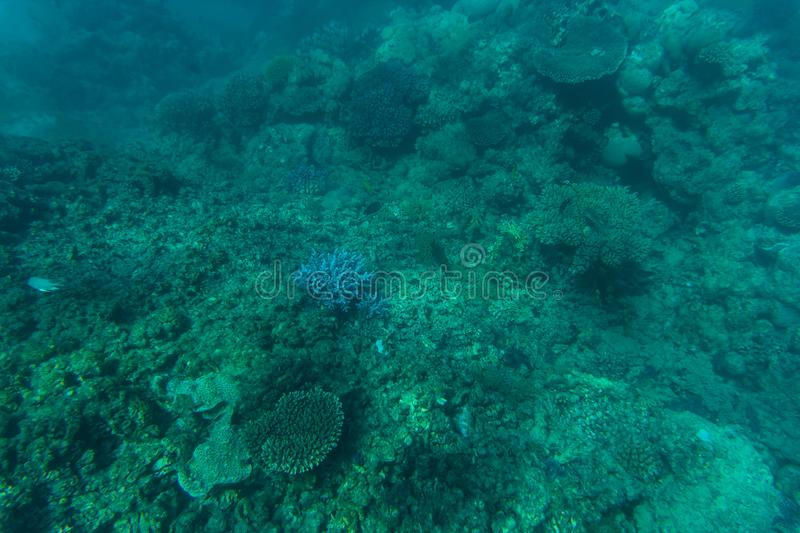 Snorcheling on a beautiful colorful coral reef in sea. Summer vocation. royalty free stock photography
