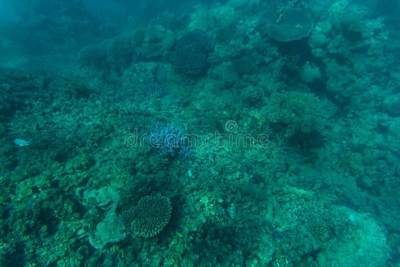 Snorcheling op een mooi kleurrijk koraalrif in overzees De zomerroeping royalty-vrije stock fotografie