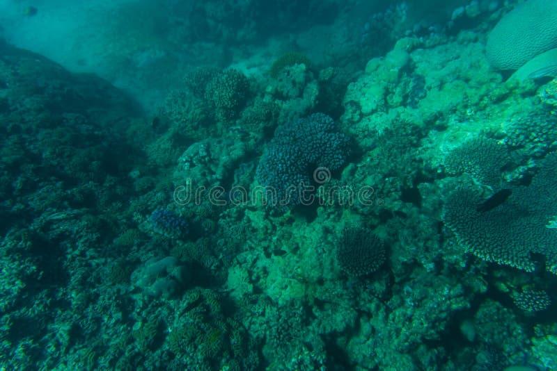 Snorcheling op een mooi kleurrijk koraalrif in overzees De zomerroeping royalty-vrije stock foto's