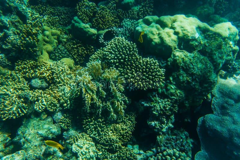 Snorcheling op een mooi kleurrijk koraalrif in overzees De zomerroeping stock afbeelding