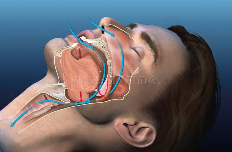 Snoring, medicinsk 3D-illustration vektor illustrationer