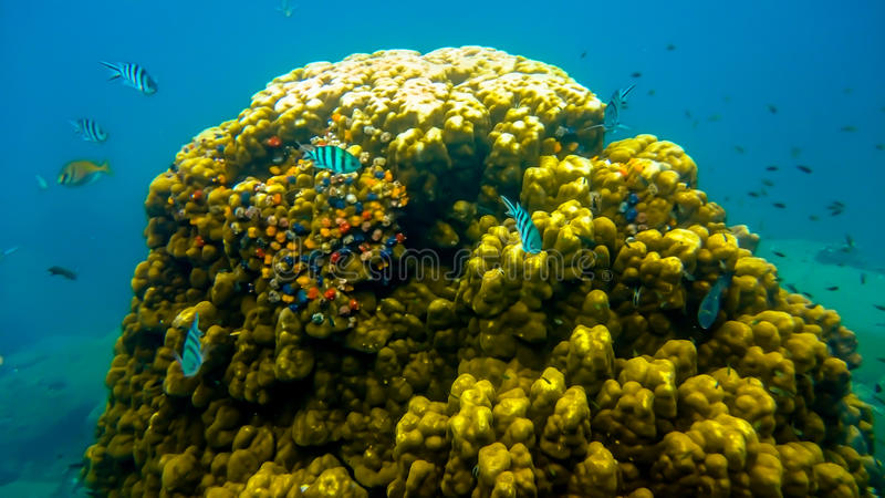 Snorkel, Koh Tao. View while snorkel at Koh Tao in beautiful sunny day royalty free stock photos