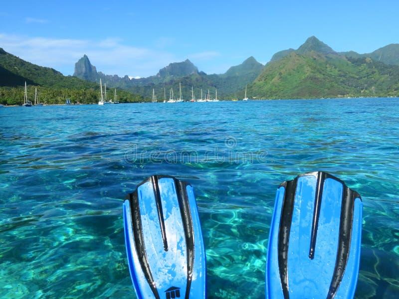 Snorkel in Moorea stock foto's