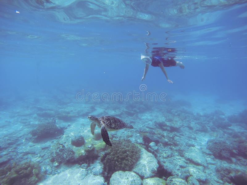 Snorkel with sea turtle. Woman swims undersea in swimming costume and full-face mask. royalty free stock photo