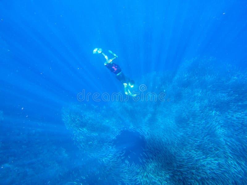Snorkeldyk till sardinskola Enorm koloni av den pelagiska fisken Öppet vatten av det tropiska havet Freediver gör fotoet undervat royaltyfri bild