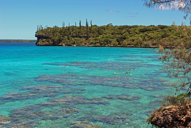 Snorkelend lagune in Lifou-eiland, Zuid-Pacifisch Nieuw-Caledonië, stock fotografie