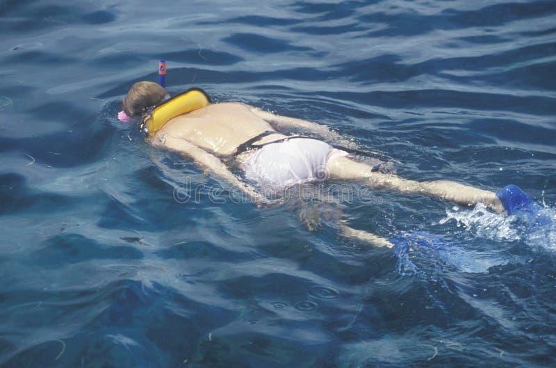 Snorkeler在水中,基韦斯特岛, FL 免版税库存照片