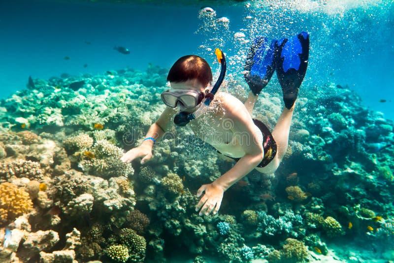 snorkeler Красного Моря стоковые фотографии rf