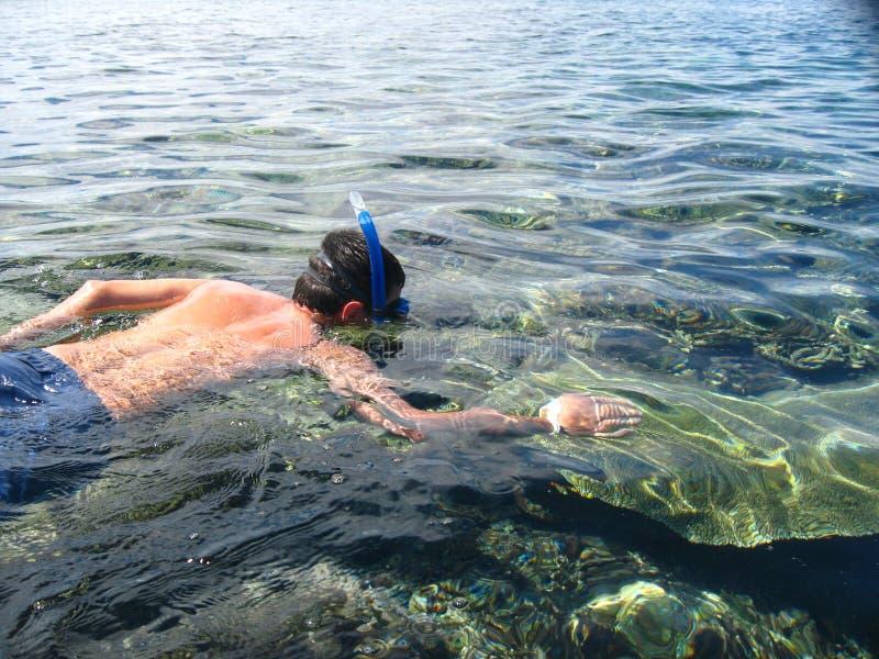 Snorkeler stock foto