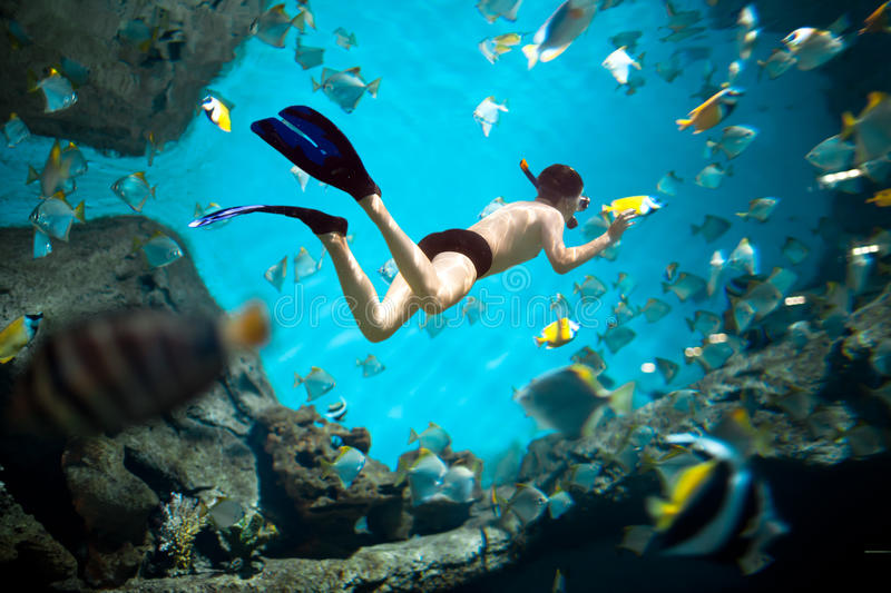 Download Snorkeler stock photo. Image of nature, summer, adventure - 25185548