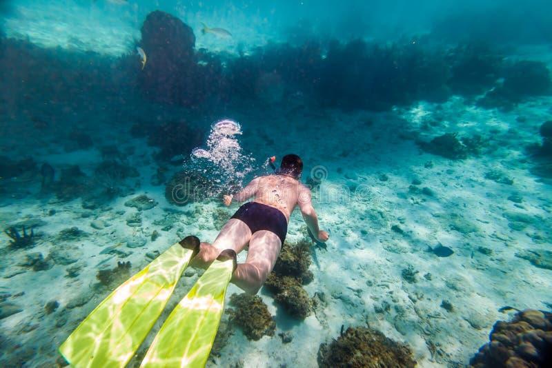 snorkeler imagens de stock royalty free