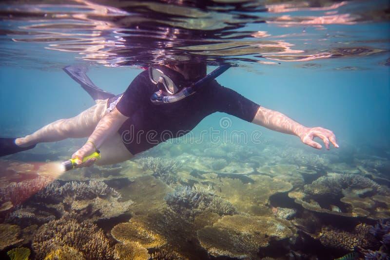 snorkeler fotos de stock