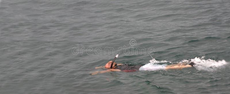 Download Snorkeler stock image. Image of blue, body, ocean, head - 7861875