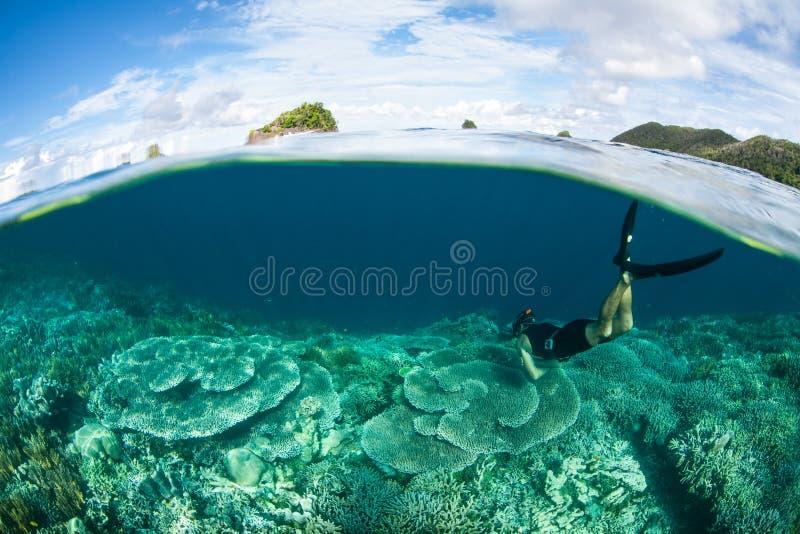 Snorkeler e Coral Reef rasa em Raja Ampat foto de stock royalty free