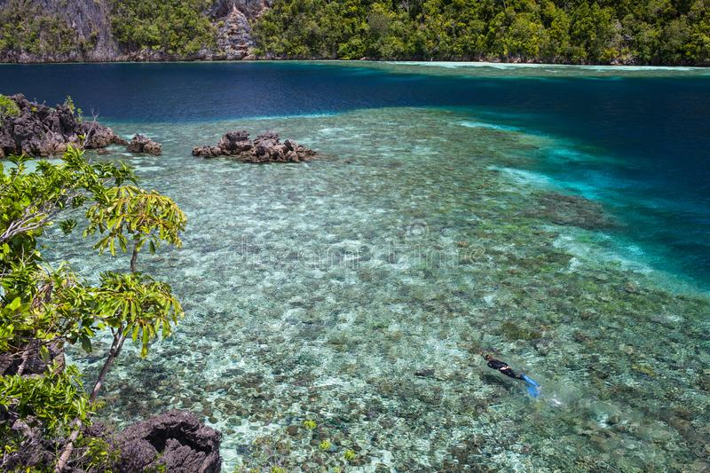 Snorkeler Explores Shallow Coral Reef in Raja Ampat. A snorkeler explores a shallow reef flat among the rugged limestone islands of Raja Ampat, Indonesia. This stock images