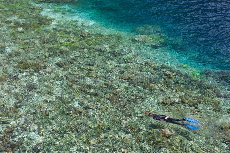 Snorkeler Explores Shallow Reef in Raja Ampat. A snorkeler explores a shallow reef flat among the rugged limestone islands of Raja Ampat, Indonesia. This royalty free stock photos