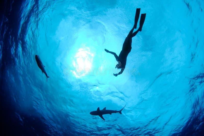 Snorkeler, Haifisch und Fische stockfotografie